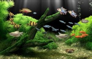 Необходимые ингредиенты аквариума с растительностью