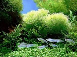 Процессы внутри аквариума (для начинающих)